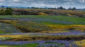 Table Mountain In Northern California Will Completely Transform When The Flowers Bloom This Spring