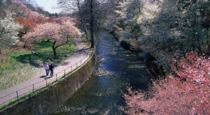 Take A Virtual Walk Through The Cherry Blossoms At New Jersey's Branch Brook Park