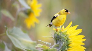 Watch Out For These 9 Birds That'll Be Appearing Again In Oregon Backyards During Spring