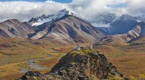 Take A Virtual Tour Through A Sea Of Mosses and Lichens In Denali National Park In Alaska