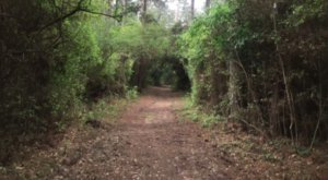 Take A Hike Into Kleb Woods Nature Preserve, A Fairytale Forest In Texas