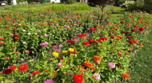 Visit Rosaly's Garden, A Multi-Acre U-Pick Flower Farm In New Hampshire