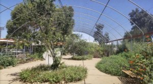 Butterfly Farms Of Southern California Is Home To The State's Largest Butterfly House