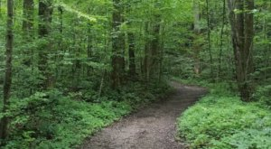 Tri-State Peak Is One Of The Best Hiking Summits for Viewing Multiple States In Virginia
