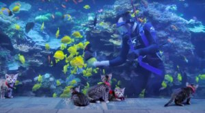 Watch Adorable Atlanta Kittens Get A Private Tour Of This Empty Georgia Aquarium