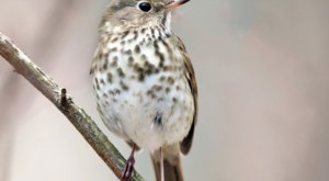 Watch Out For These 7 Birds That'll Be Appearing Again In Vermont Backyards During Spring