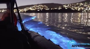 The Glowing Blue Waves At Southern California's Newport Beach Are A Strange Natural Phenomenon