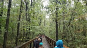 Big Cypress Tree State Park Is One Of The Most Secluded And Beautiful Hidden Gems In The State Of Tennessee