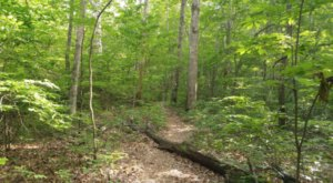 Escape The Entire World On The Secluded Devil's Breakfast Table Trail In Tennessee