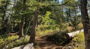 This Easy Nature Trail Near Idaho Leads You Through A Peaceful Forest And Straight To A 500-Year-Old Tree