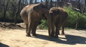 The Cincinnati Zoo In Ohio Is Offering Free Livestreams Of Elephants, Wallabies, And More