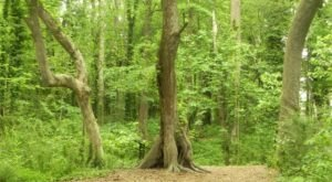 Surround Yourself In A Forest Filled With 200-Year-Old Trees At The Chesapeake Arboretum In Virginia
