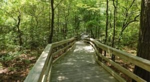 Take An Easy One-Hour Loop Trail To Enter Another World At First Landing State Park In Virginia