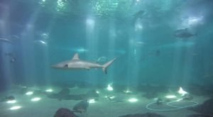 The Maui Ocean Center In Hawaii Is Offering Free Livestreams Of Sharks, Stingrays, And More