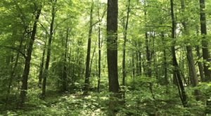 Explore Wide Open Spaces At Pine Mountain Reserve, A 368-Acre Natural Area In Connecticut