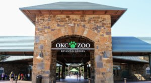 The Oklahoma City Zoo Is Live Streaming Red Pandas For Your Enjoyment