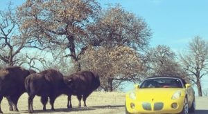Every Wednesday, Drive Through The Magnificent Woolaroc Wildlife Preserve In Oklahoma For Free