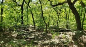 Explore Over 300 Acres Of Undeveloped Woodlands At Turkey Mountain Urban Wilderness Area In Oklahoma