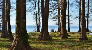 Pettigrew State Park In North Carolina Is A Big Secluded Treasure