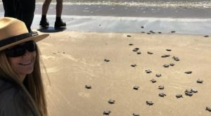 Kemp's Ridley Sea Turtles Are Beginning To Nest In Texas, And It's Looking Like A Busy Season