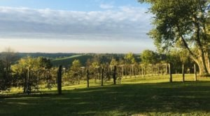 One Of The Oldest Vineyards In The Country Can Be Found In The Hills Of Kentucky