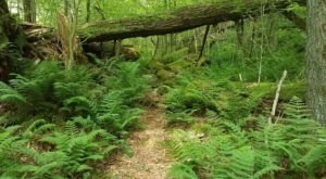 The Enchanting Thick Mountain & Swift Run Trail In Pennsylvania Is Like Something From A Fairy Tale