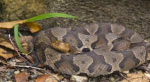 Watch Your Step, More Venomous Snakes Are Emerging From Their Dens Around Kentucky