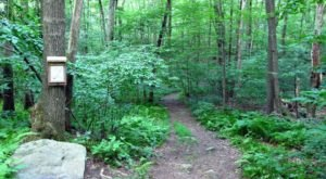 A Scenic Getaway In Connecticut, Campbell's Peaceful Valley Conservation Area Is Full Of Lovely Hiking Trails
