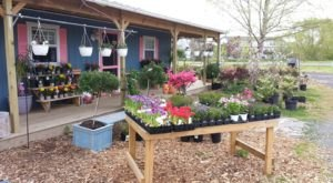 Start Your Garden With A Grow-Your-Own Kit From Delaware's Inland Bay Garden Center