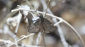 New Mexico Is Being Pestered By Millions Of Moths Currently Invading The State