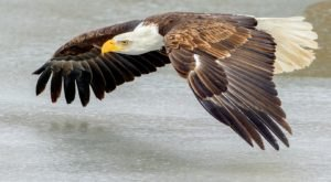 With More Than 200 Nests Reported In 2020, The Bald Eagle Is Officially Making A Comeback In New Jersey