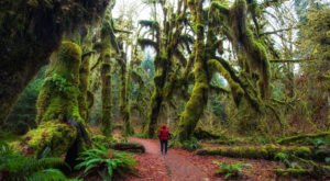 Hiking At The Hoh Rain Forest In Washington Is Like Entering A Fairytale