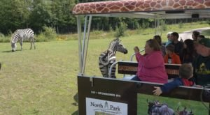 The Safari Tram Ride At Wisconsin's Wildwood Wildlife Park Is Perfect For Your Next Outing