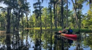 Surround Yourself In A Sea Of Emerald Greens On A Kayak Swamp Tour Near New Orleans