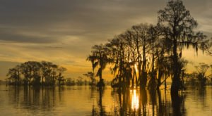The Atchafalaya Swamp Was Named The Most Beautiful Place In Louisiana And We Have To Agree