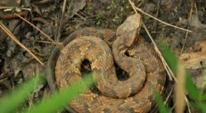 Watch Your Step, More Snakes Are Emerging From Their Dens Around Tennessee