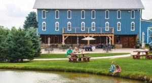 You Can Drink Wine With Horses And Donkeys At Blue Barn Winery In Ohio