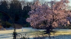 It's The Perfect Time To See Cherry Blossoms And Other Seasonal Blooms At Arnold Arboretum In Massachusetts