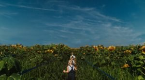 Drone Footage Of A Five-Acre Sunflower Maze In Illinois Will Get You Excited For Summer