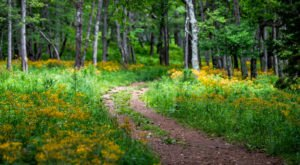 Surround Yourself With Wildflowers On Story Of The Forest Trail In Shenandoah National Park