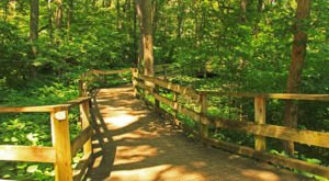 The Entire Fontenelle Forest Boardwalk Hike In Nebraska Can Now Be Taken From Your Couch
