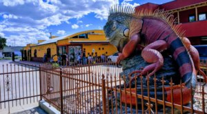 There's A 33-Foot-Long Iguana In Downtown Salt Lake City, Utah