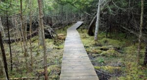 Hiking At Thorne Swift Nature Preserve In Michigan Is Like Entering A Fairytale