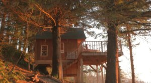Sleep High Up In The Forest Canopy At The Bluebird House In Oregon