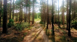 Take An Easy Loop Trail To Enter Another World At Pigeon Creek Park In Michigan