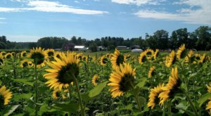 Here's The Ultimate Bucket List For New Hampshirites Who Are Obsessed With Nature