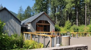 Admission-Free, The Tillamook Forest Center In Oregon Is The Perfect Day Trip Destination