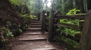 The Lush Forest Trails Through Sequoia Park In  Northern California Will Give You Respite From Stress