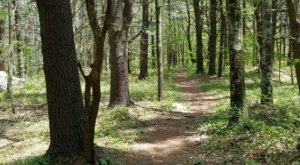 Stroll Through A Peaceful White Pine And Hemlock Forest At Cathedral Pines In Connecticut