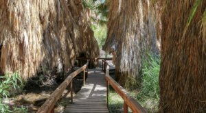The Lush Jungle Trails Through Coachella Valley Preserve In Southern California Will Lead You To A Gorgeous Outdoor Oasis